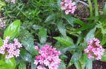 090-小さな赤い花.jpg