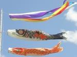 122-鯉のぼり.jpg