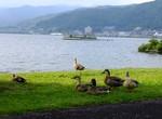 ありがとう新聞076諏訪湖のアヒル.jpg